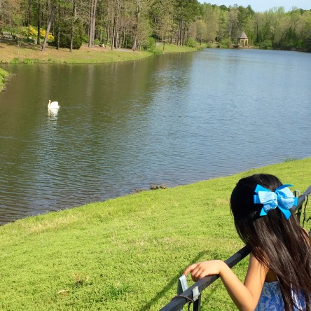 Nat watching a swan