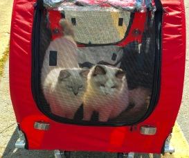 Kittens in a cart