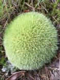 Pretty moss