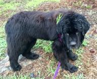 Wet Louie wearing greenery
