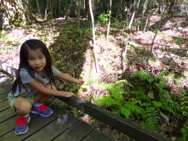 Admiring the ferns
